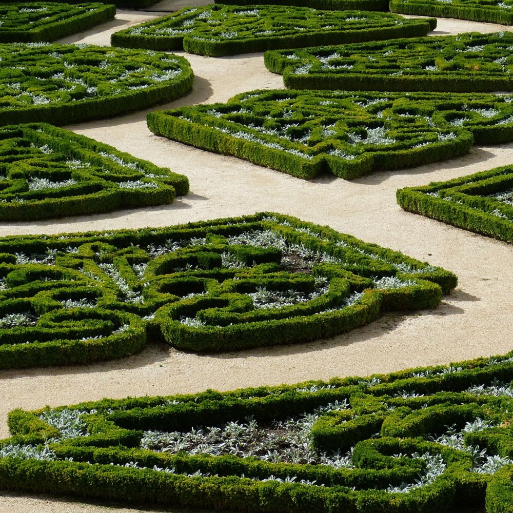 buis commun plantes et jardins. Black Bedroom Furniture Sets. Home Design Ideas