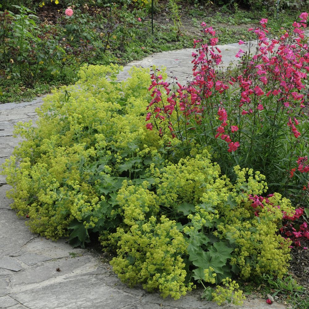 Gamm vert for Catalogue jardinerie