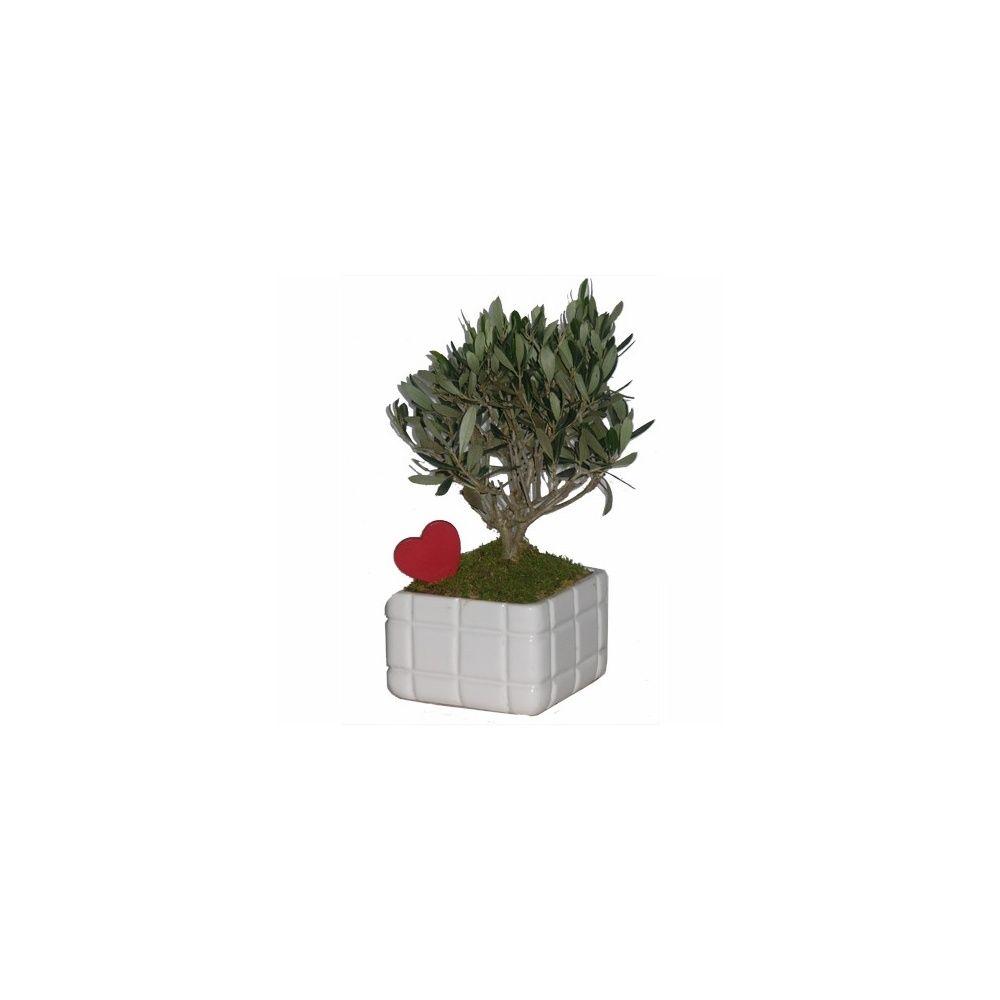 olivier cache pot carr blanc coeur plantes et jardins. Black Bedroom Furniture Sets. Home Design Ideas