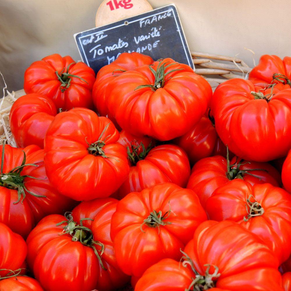 tomate 39 marmande 39 plantes et jardins
