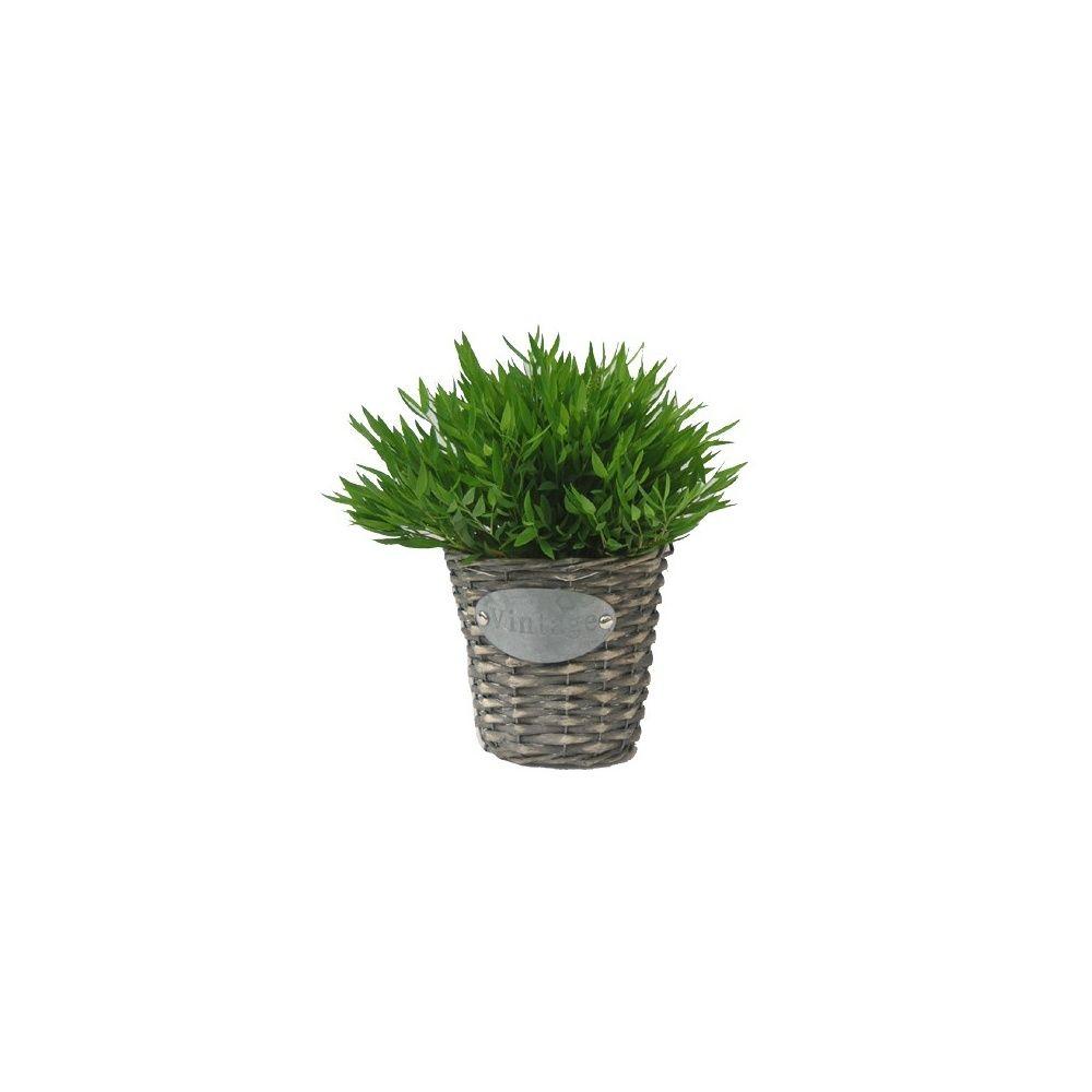 Bambou d 39 int rieur 39 extase 39 cache pot vintage plantes for Bambou en interieur