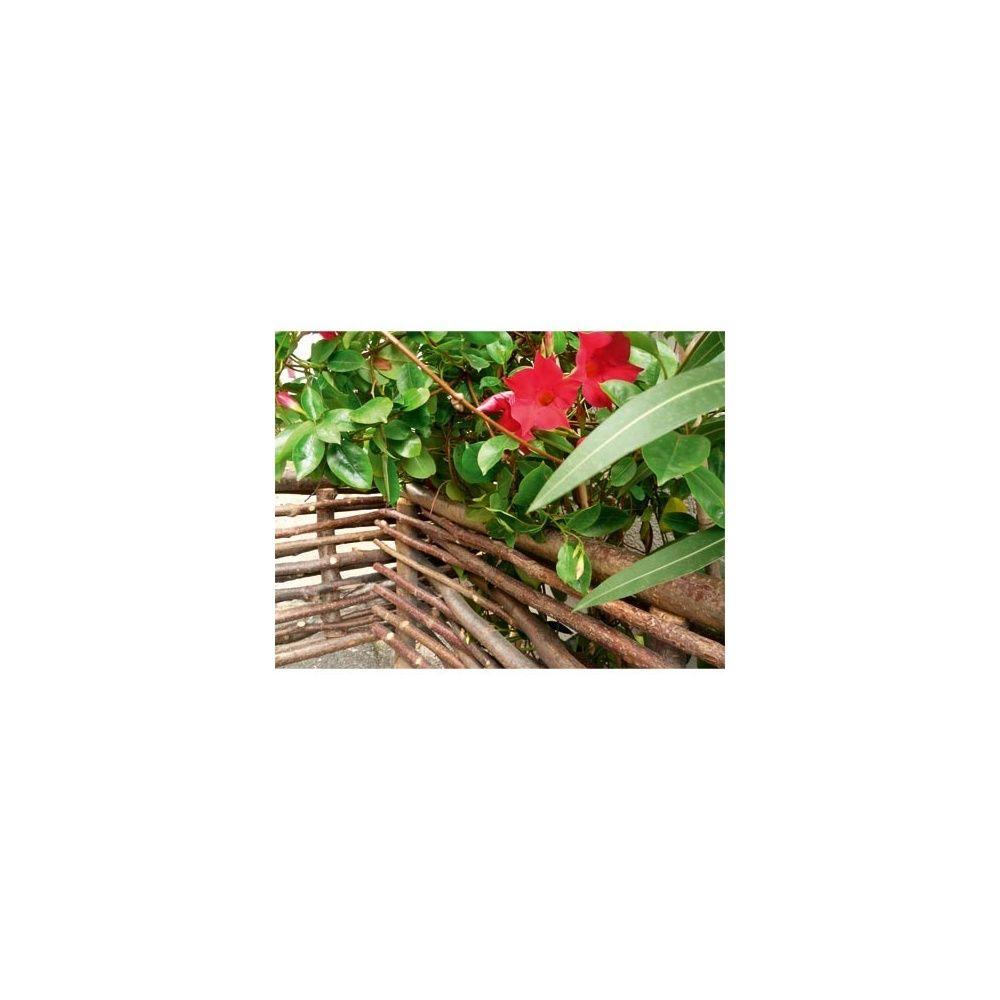 Bordure en noisetier et acacia Intermas Celloplast Plantes et Jardins # Bordure Bois A Planter Gamm Vert