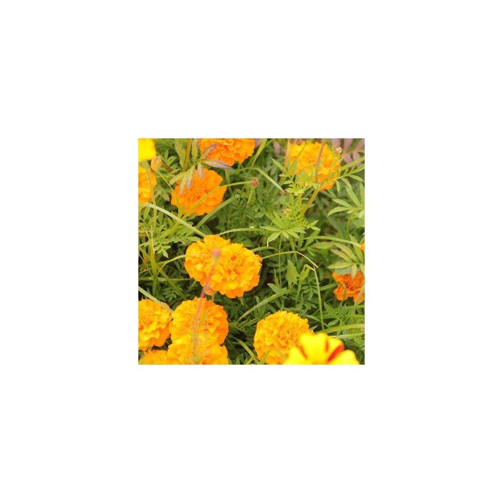 Prairie fleurie les amis du jardin je limite les for Au jardin by les amis