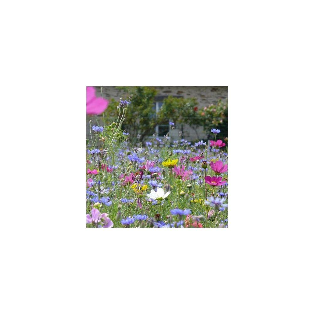 Prairie fleurie les amis du jardin j 39 invite les for Au jardin by les amis