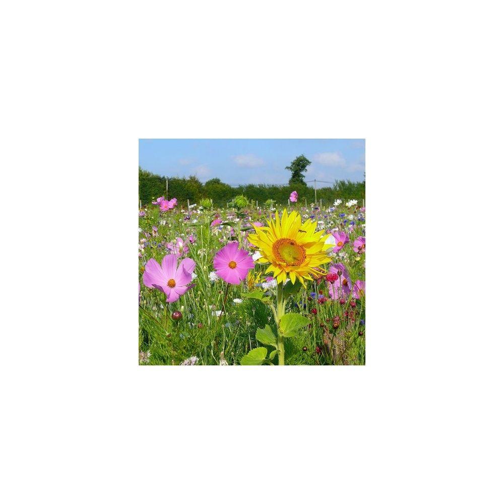 Prairie fleurie les amis du jardin je fais la vie belle for Au jardin by les amis