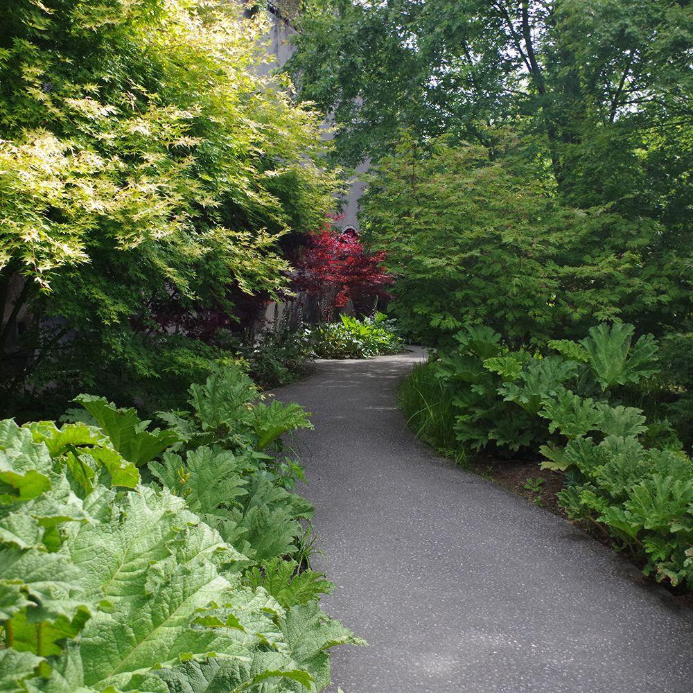 gunnera manicata plantes et jardins. Black Bedroom Furniture Sets. Home Design Ideas