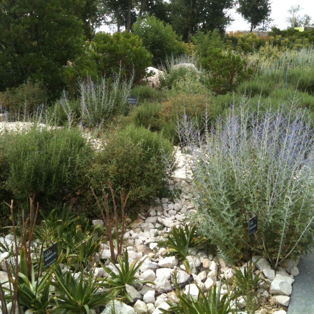 Perovskia 39 blue spire 39 plantes et jardins for Plante et jardin catalogue