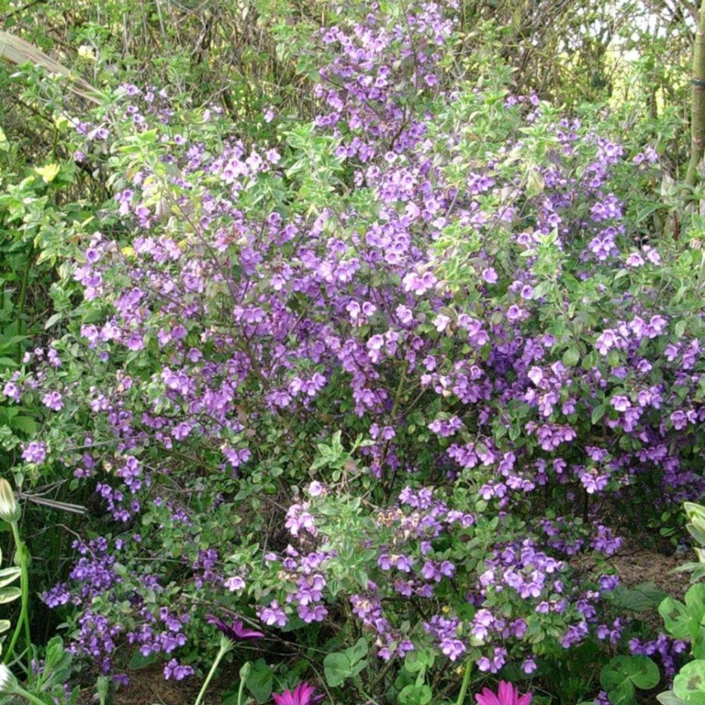 Menthe en arbre plantes et jardins for Plantes et jardins adresse