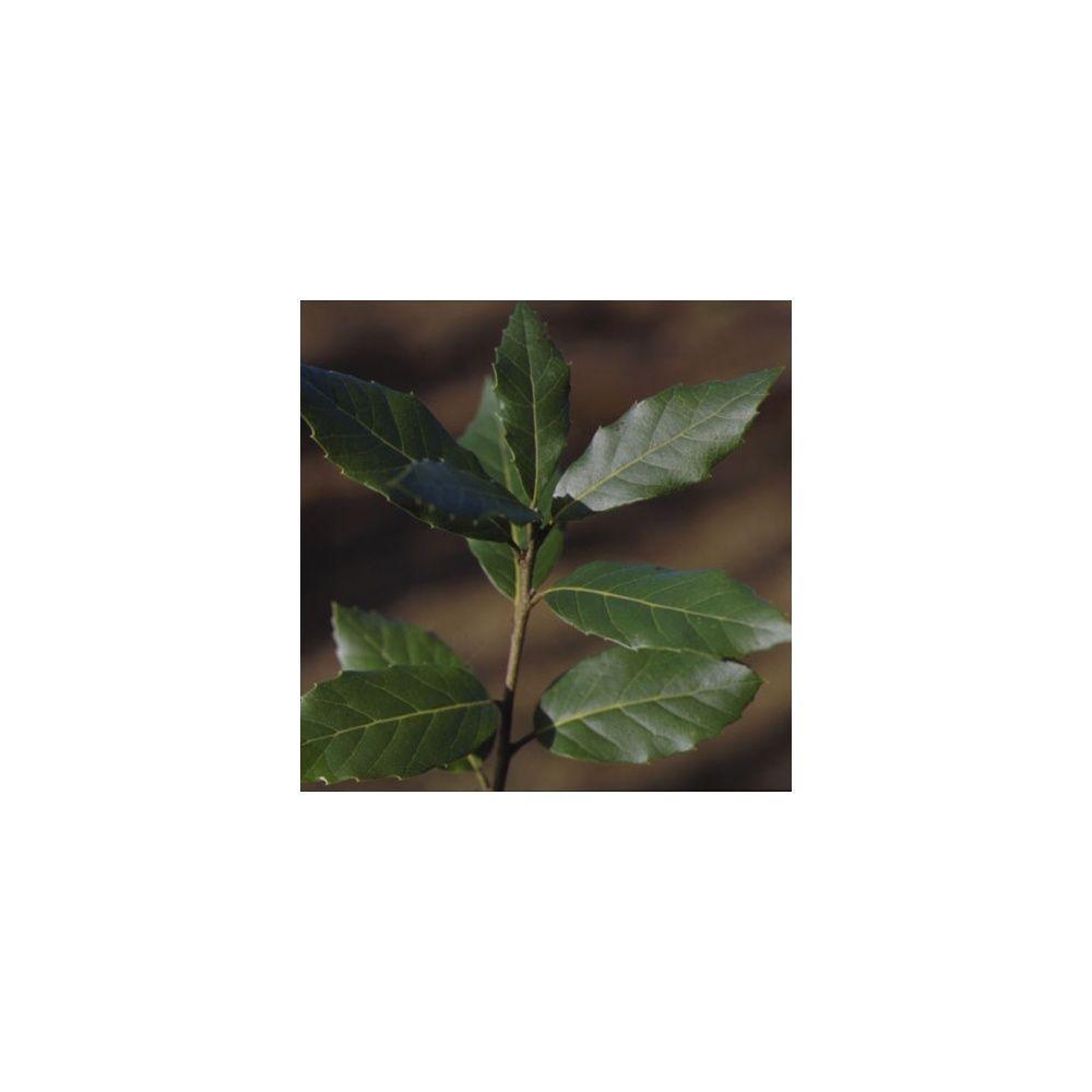 Ch ne vert plantes et jardins for Plante et jardin catalogue