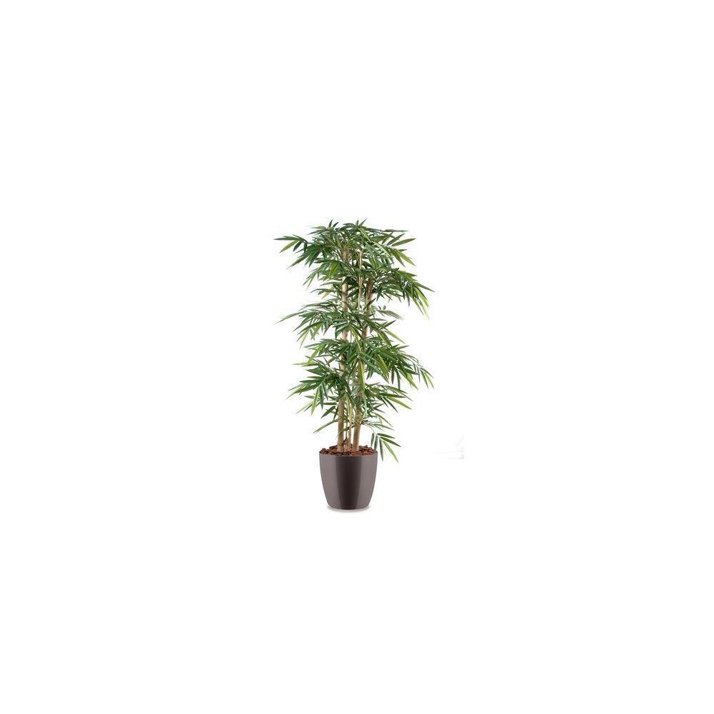 Bambou grosses cannes h150 cm cannes naturelles for Plante 150 maladies madagascar