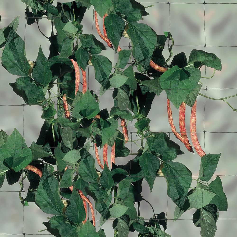 filet ramer 2x5 m gamm vert plantes et jardins. Black Bedroom Furniture Sets. Home Design Ideas