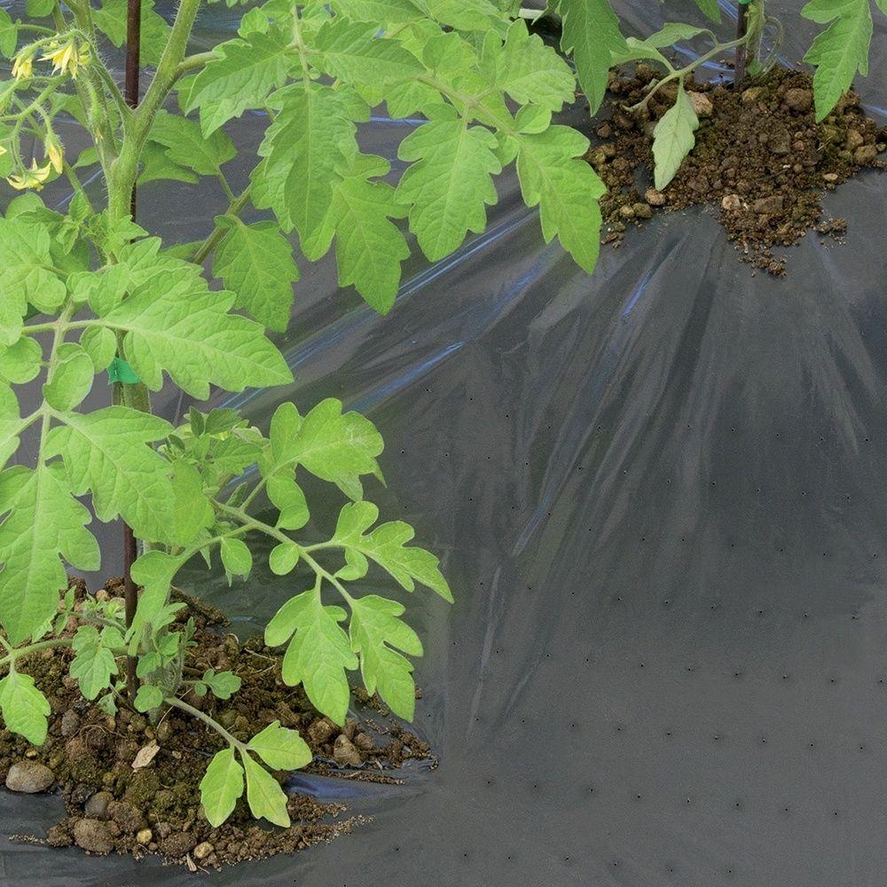 paillage toute culture 1 4x5m gamm vert plantes et jardins. Black Bedroom Furniture Sets. Home Design Ideas