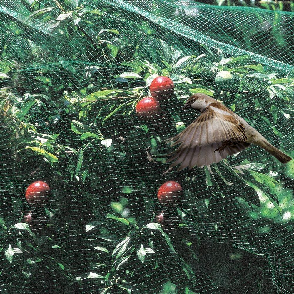 Film protection oiseau 4x5m gamm vert plantes et jardins - Comment congeler des haricots verts frais du jardin ...
