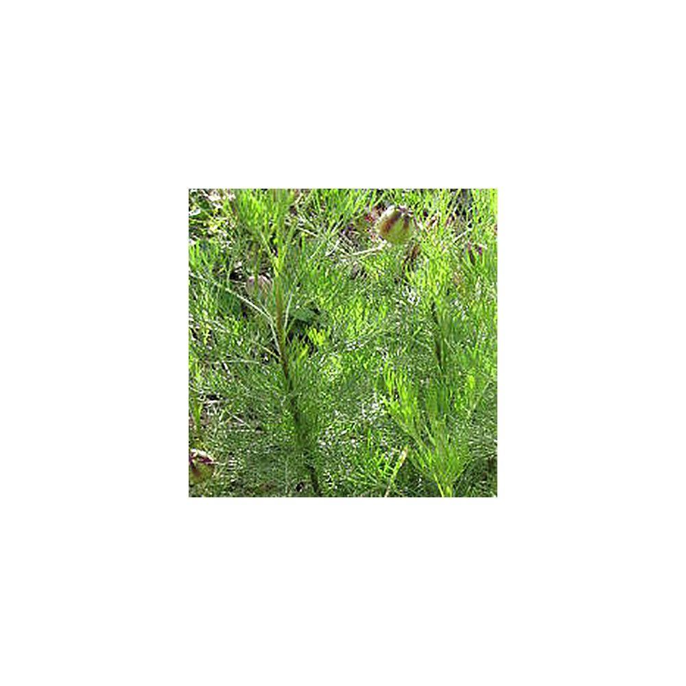 Plante cola le lot de 3 plantes et jardins for Plante et jardins
