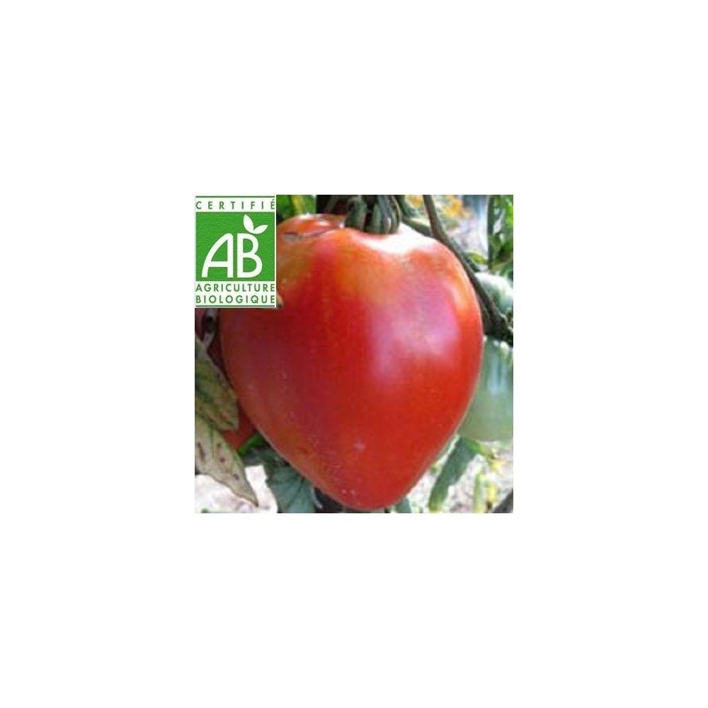 Tomate 39 cuor di bue 39 coeur de boeuf bio plantes et jardins - Planter des tomates coeur de boeuf ...