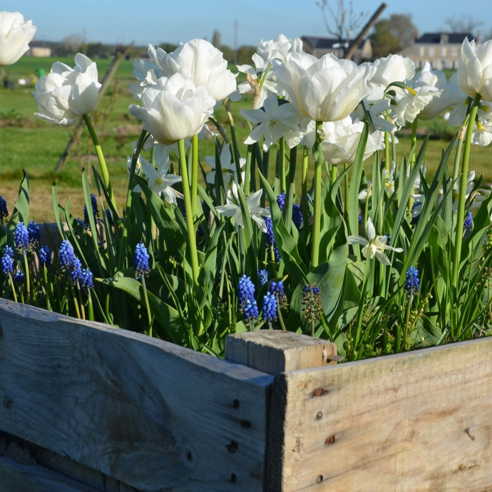 Un carr paysag jardin tendance bleu et blanc plantes for Paysage jardin