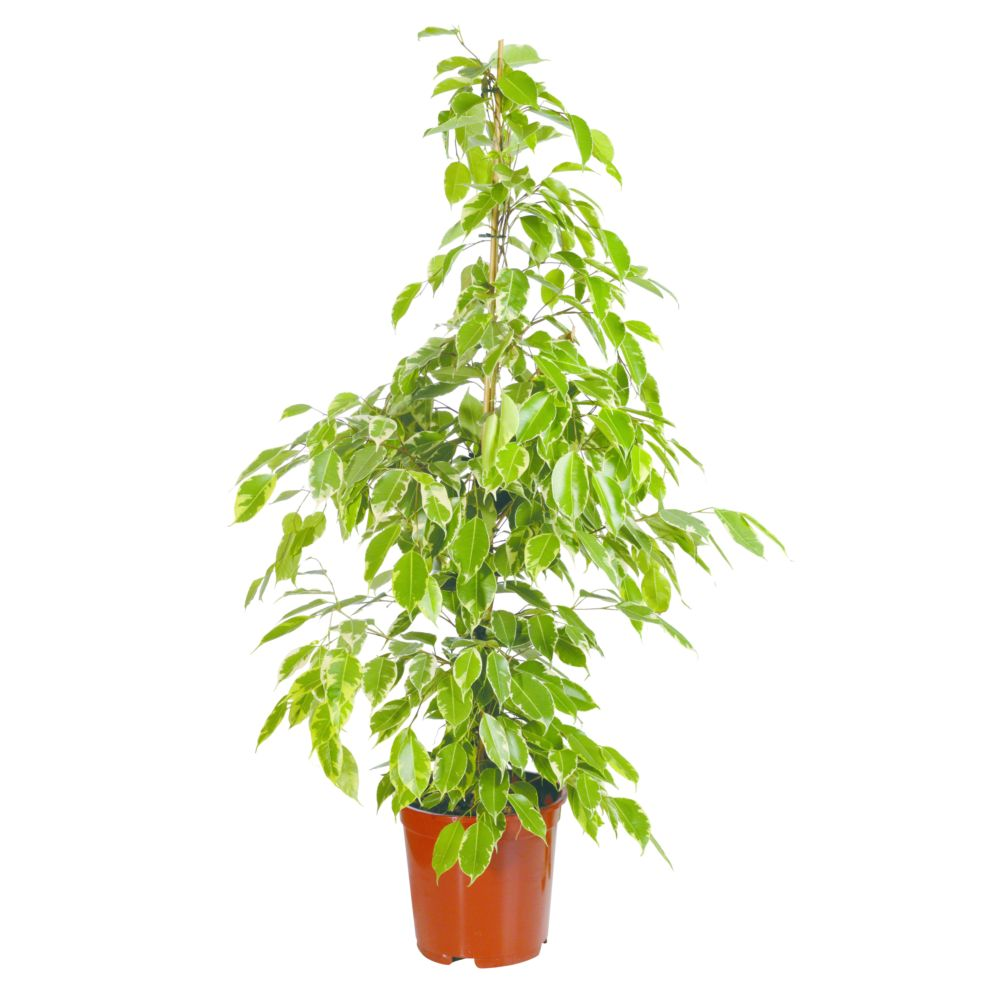 Plante verte int rieur fashion designs for Grandes plantes vertes originales