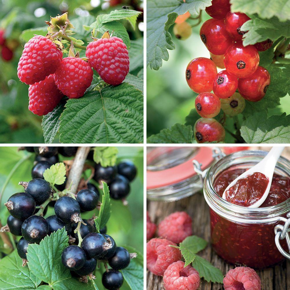 Lot de 3 fruits rouges : spécial confitures