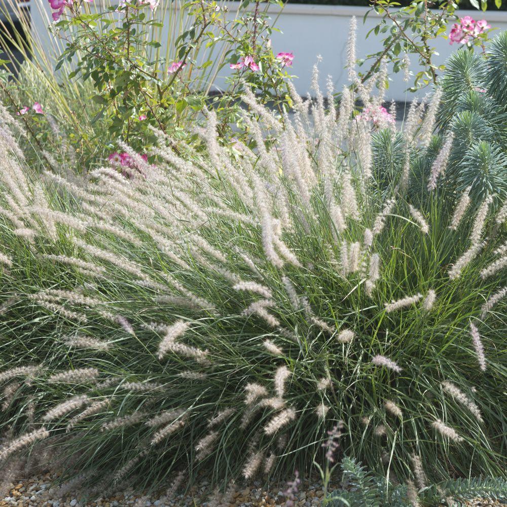 Plantes decoratives extrieur perfect photo brouette for Plantes decoratives jardin