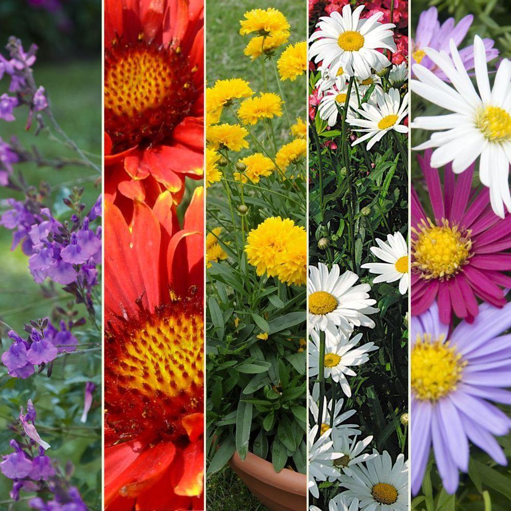 Kit de vivaces massif fleuri plantes et jardins for Plantes fleuries vivaces