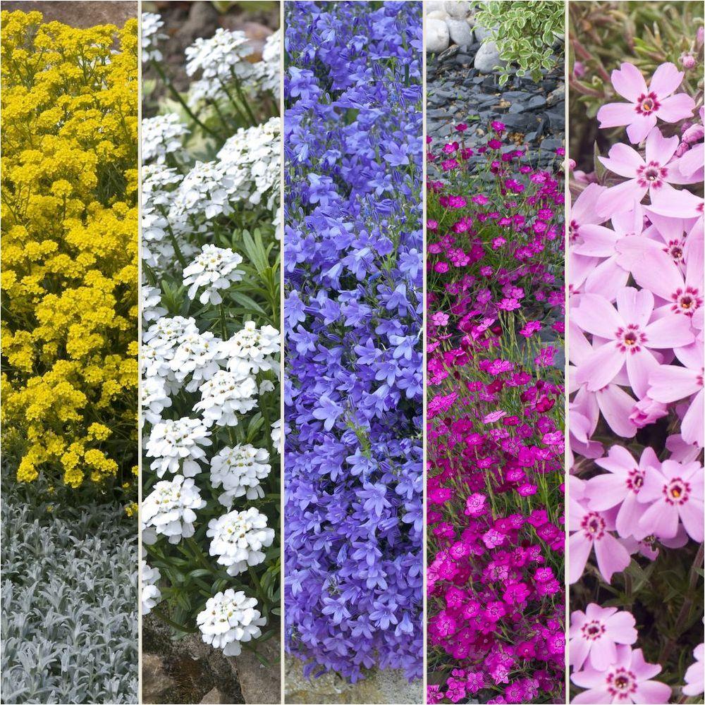 Kit de vivaces rocaille fleurie plantes et jardins for Plante de jardin vivace