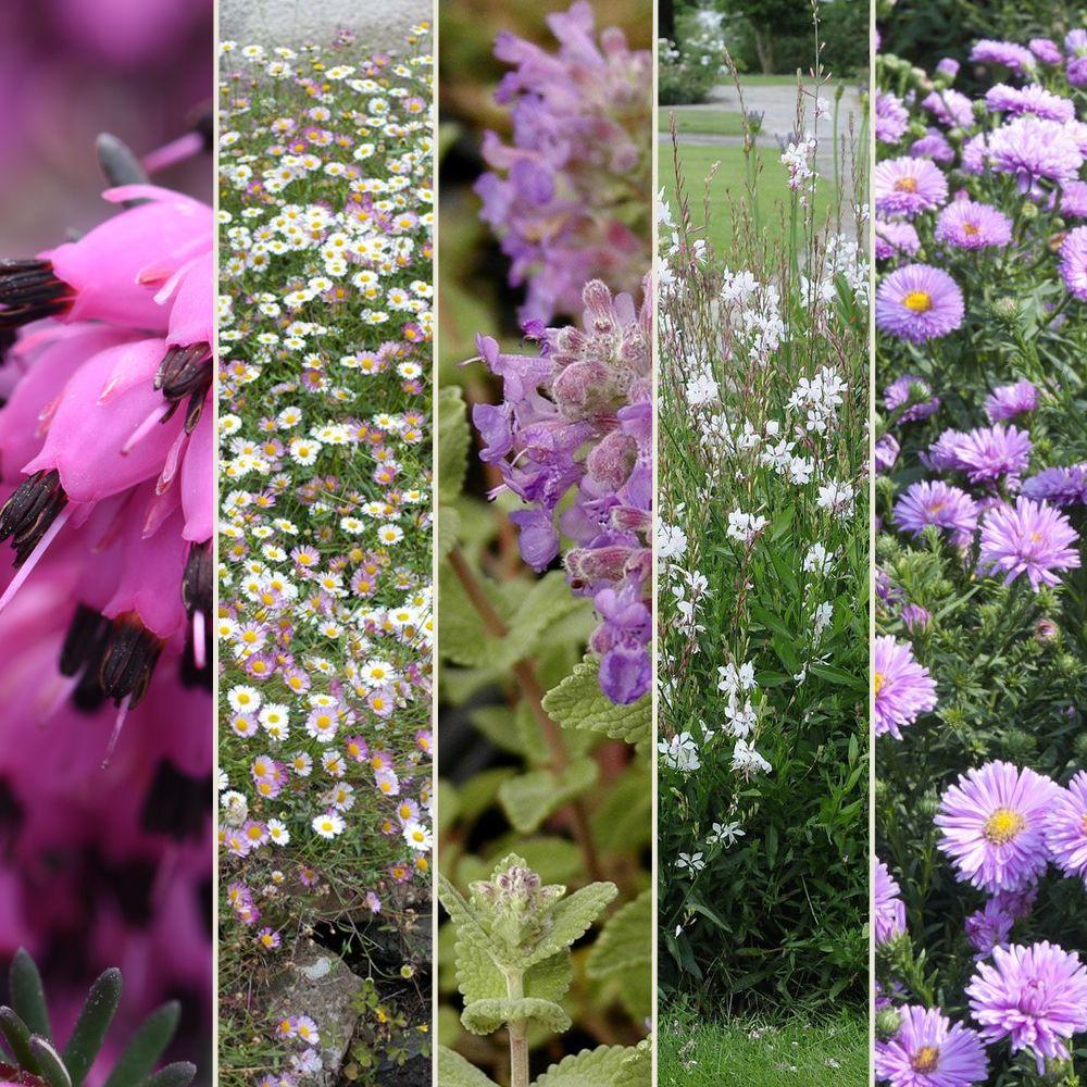 kit de vivaces 12 mois de fleurs plantes et jardins. Black Bedroom Furniture Sets. Home Design Ideas