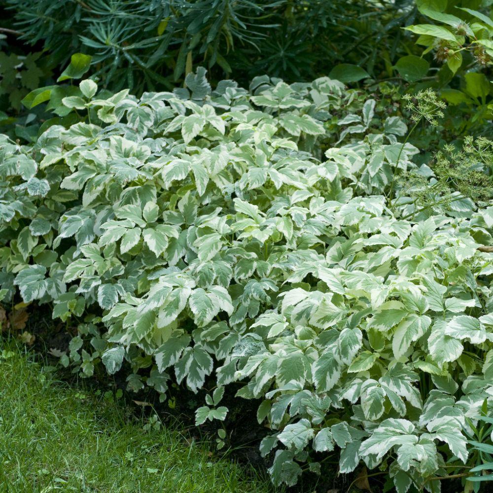 Kit de vivaces jardin de cur plantes et jardins for Plante et jardins