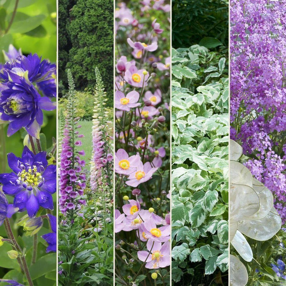 Kit de vivaces jardin de cur plantes et jardins for Jardin de plante