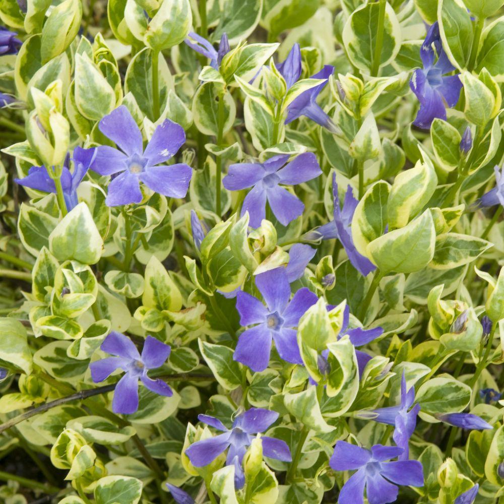 Kit de vivaces jardin d 39 ombre plantes et jardins for Plantes et jardins