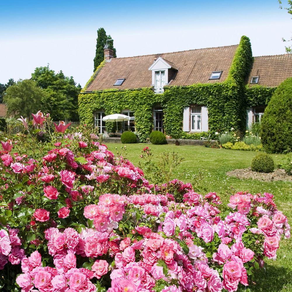 D corosier 39 emera 39 plantes et jardins for Plantes et jardins adresse