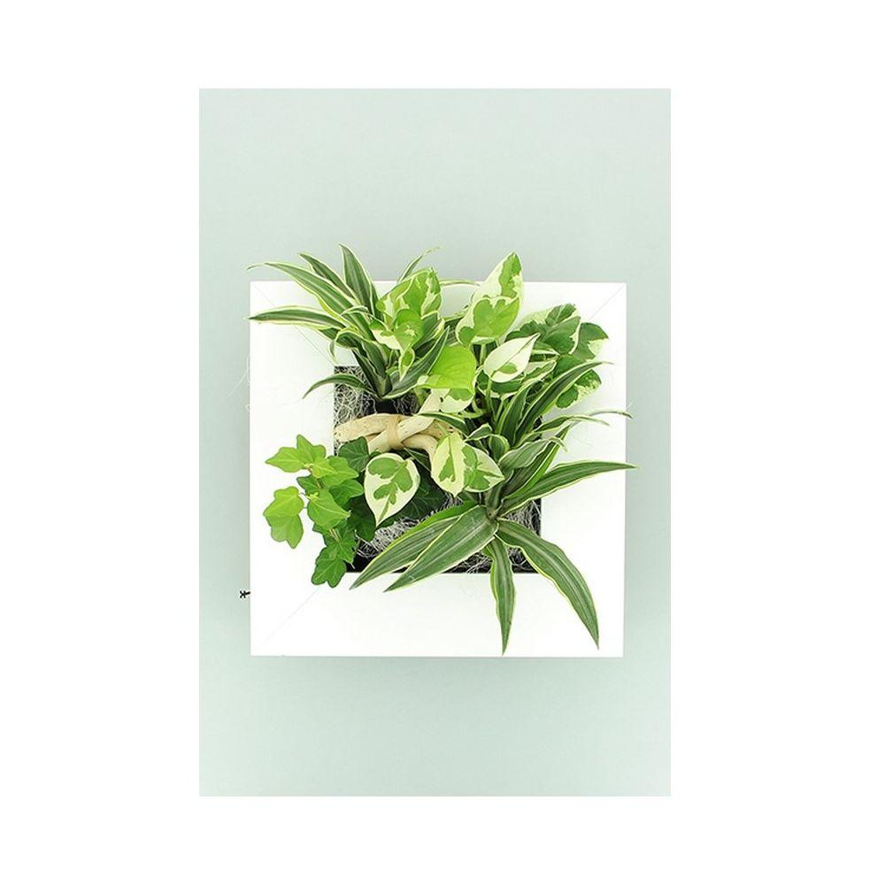 Cadre v g tal wallflower kyoto blanc s plantes et jardins for Cadre mural plantes