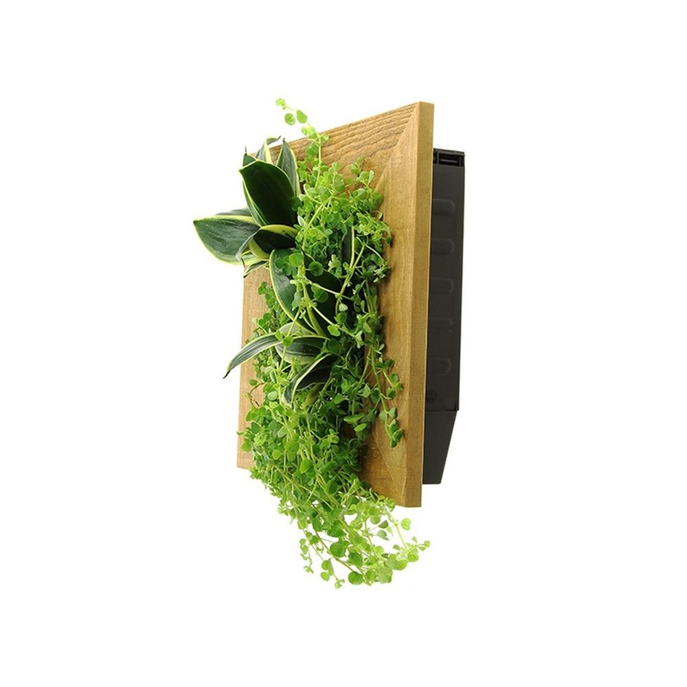 Cadre v g tal wallflower kyoto vieux bois s plantes et jardins - Cadre vegetal jardiland ...