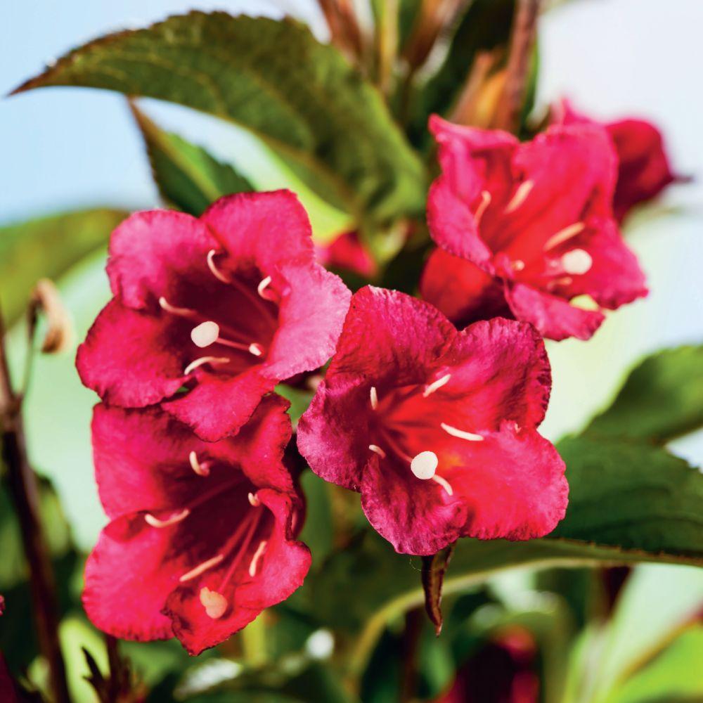 Kit de haie fleurie pour 10 m plantes et jardins for Plantes et jardins