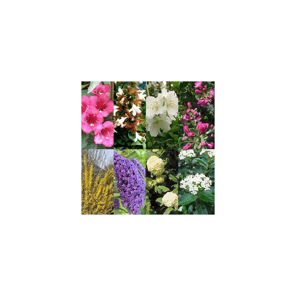Kit de haie fleurie pour 10 m plantes et jardins for Plante fleurie pour jardin