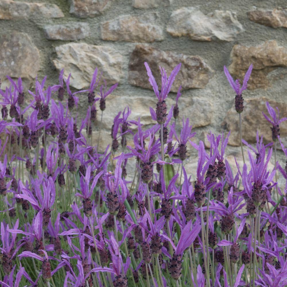 Plantes Pour Bordures Fleuries