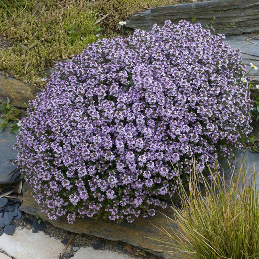 Rocaille fleurie rocaille moderne avec jardin on for Plante fleurie pour jardin