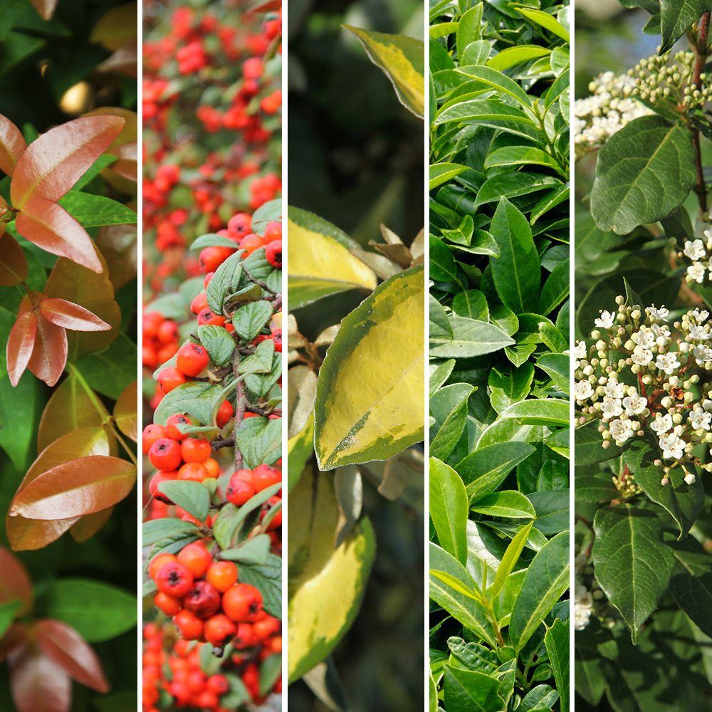 Gamm vert jardinerie et p pini re outils de jardin for Magasin de plantes