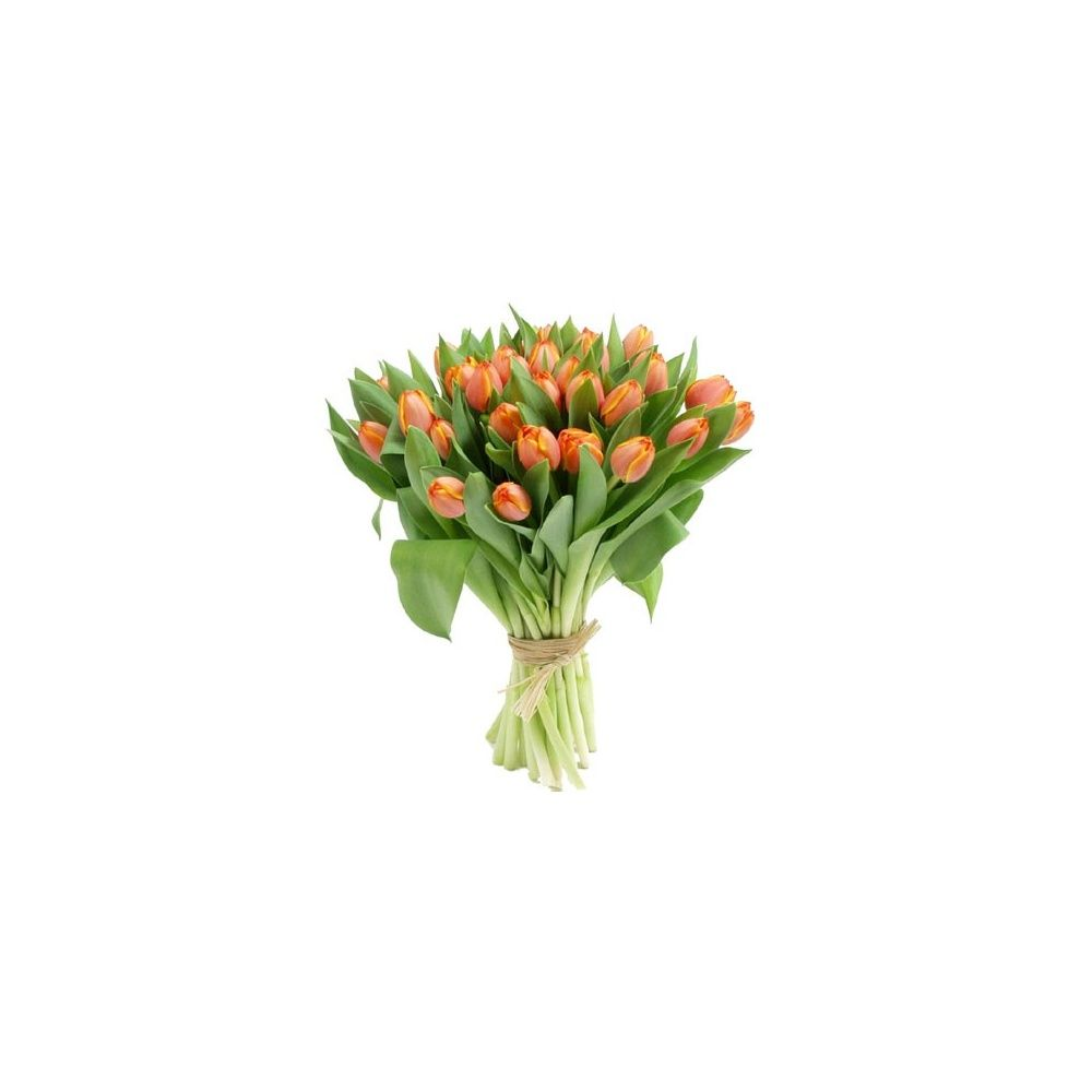 Bouquet de tulipes plantes et jardins for Bouquet de tulipes