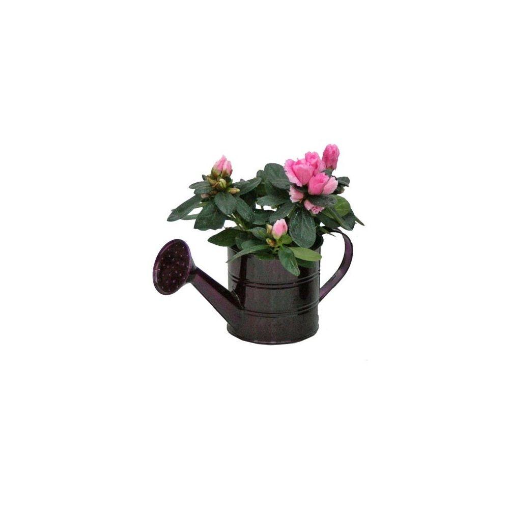 Azal e rose cache pot arrosoir en zinc plantes et jardins - Cache pot en zinc ...