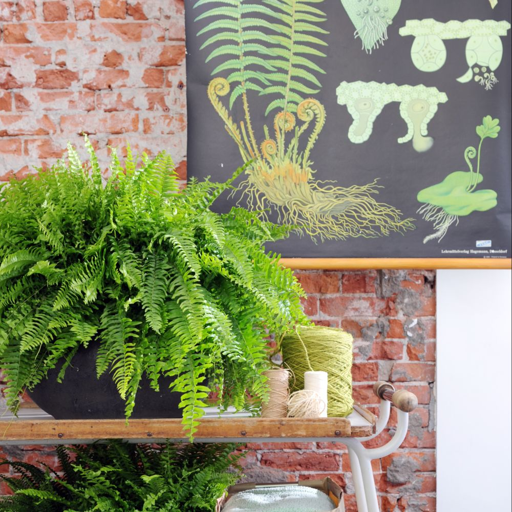 Vente plantes vertes for Catalogue plantes vertes