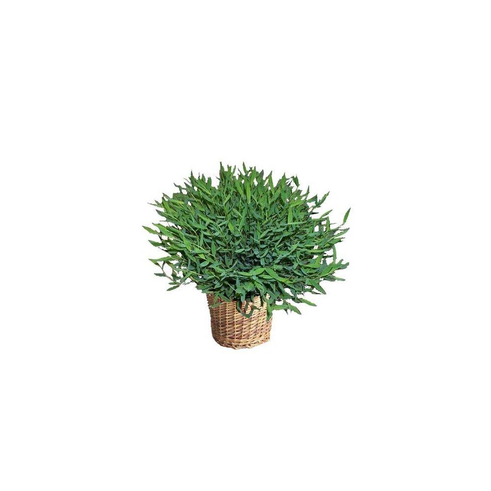 Bambou d 39 int rieur seau en zinc plantes et jardins for Bambou en interieur