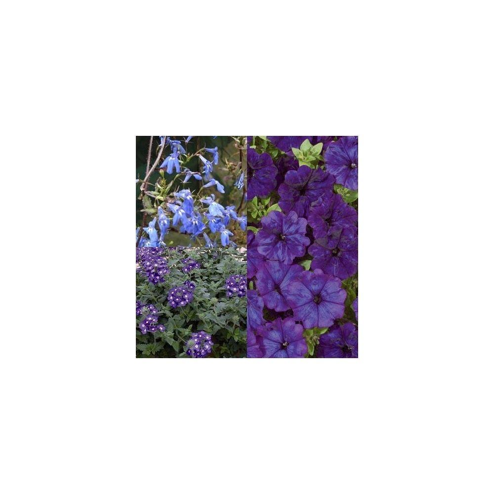 Cama eu de bleu lot de 6 plantes et jardins - Camaieu de bleu peinture ...
