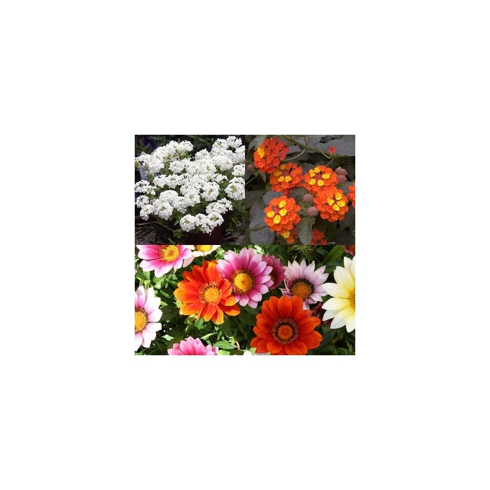 jardini re de plein soleil lot de 6 plantes et jardins. Black Bedroom Furniture Sets. Home Design Ideas