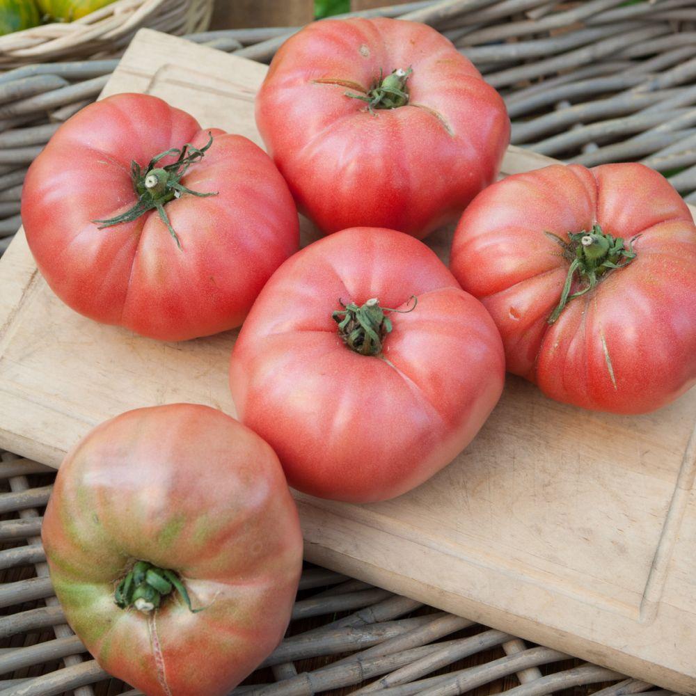tomate 39 rose de berne 39 39 berner rose 39 plantes et jardins. Black Bedroom Furniture Sets. Home Design Ideas