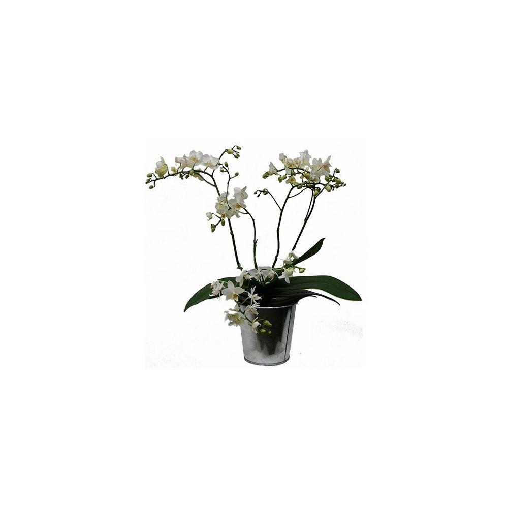 Orchid e phalaenopsis blanche en fleurs 5 branches cache pot zinc plantes et jardins - Pot de fleur en zinc ...
