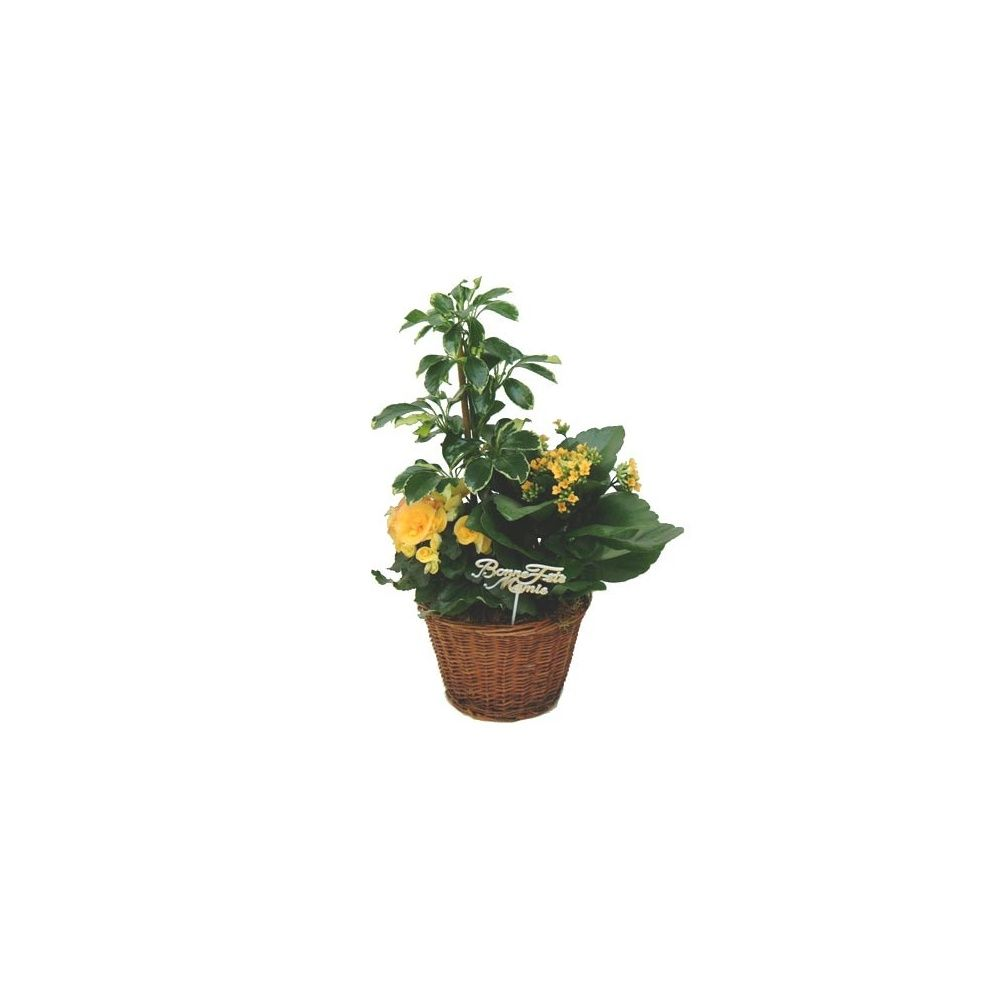 composition f te des grand m res livraison express plantes et jardins. Black Bedroom Furniture Sets. Home Design Ideas