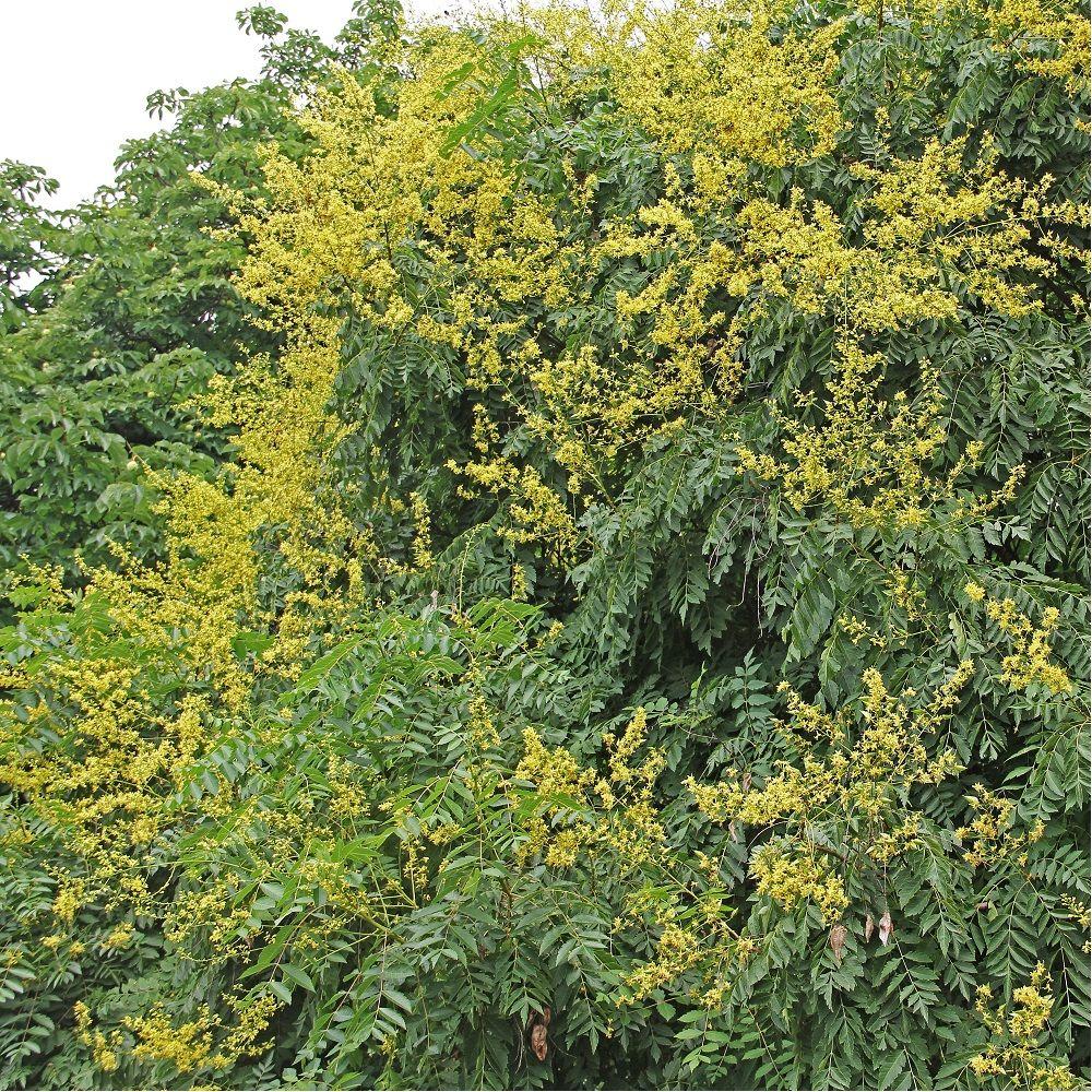 Savonnier plantes et jardins for Plantes et jardins adresse