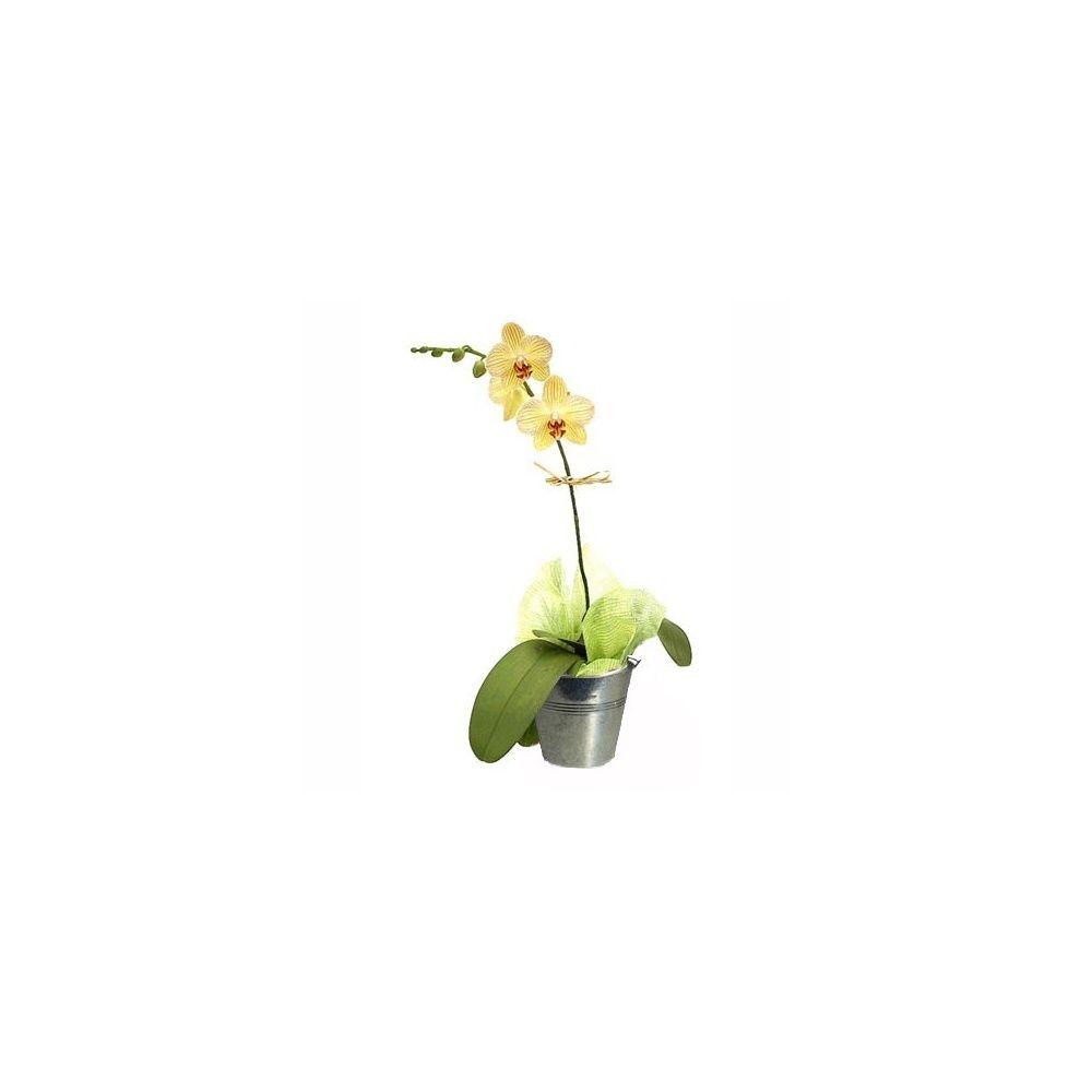 Orchid e phalaenopsis orange en fleurs 1 hampe florale ramifi e cache pot zinc plantes - Arrosage orchidee en pot ...