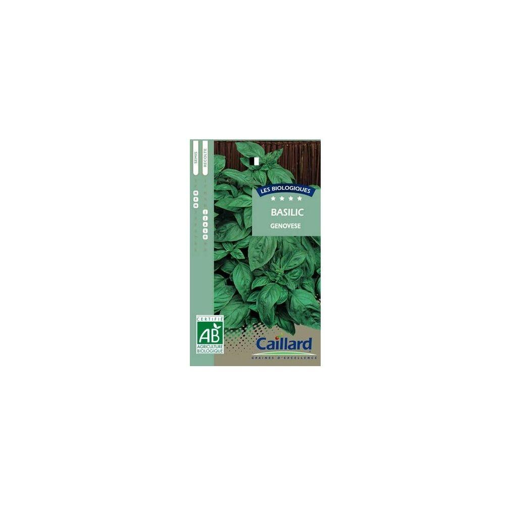 basilic grand vert 39 genovese 39 ab plantes et jardins. Black Bedroom Furniture Sets. Home Design Ideas