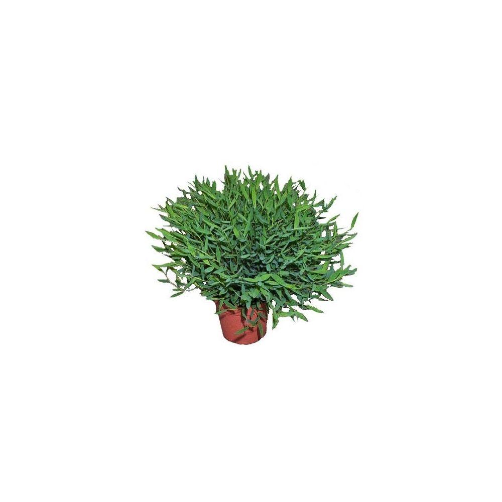 bambou d 39 int rieur cache pot livraison express plantes et jardins. Black Bedroom Furniture Sets. Home Design Ideas
